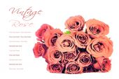 Pink roses bouquet on white background with sample text, process — Stock Photo