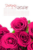 Pink roses bouquet with sample text on white background — Stock Photo