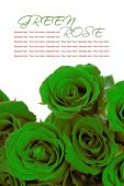 Green roses bouquet with sample text on white background — Stock Photo