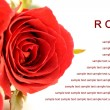 Red roses bouquet on white background, greeting card. — Stock Photo #56520143