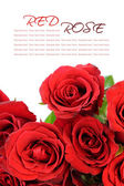 Red roses bouquet with sample text on white background — Stock Photo