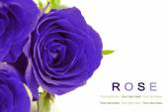 Fantasy blue roses on white background. Greeting card. — Stockfoto