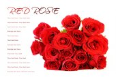 Red roses bouquet on white background with sample text. — Stock Photo