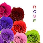 Bouquet di rose colorate con testo di esempio su priorità bassa bianca — Foto Stock