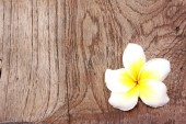 Frangipani on wood — Stock Photo