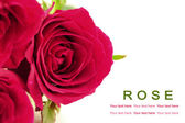 Pink roses on white background. Greeting card. — Foto de Stock