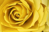 Abstract yellow rose background make from paper. — Stock Photo