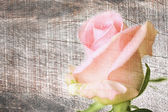 Pink rose on wooden grungy background  — Stock Photo