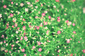 Blurred pink wild flowers for background. — Foto de Stock