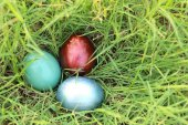 Colorful easter eggs hidden in dense grasses. Spring holidays co — Stock Photo