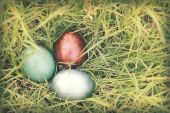 Vintage paper textures, Colorful easter eggs hidden in dense gra — Stock Photo