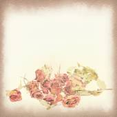 Vintage postcard, Withered roses and petals, soft light on old p — Stock Photo