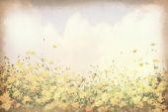 Vintage postcard, Cosmos flower in the field, soft light on old — Foto de Stock