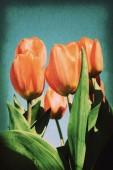 Vintage postcard on old paper texture style image, red tulip blo — Fotografia Stock