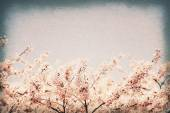 Vintage postcard. Cherry blossoms against blue sky - selective f — Stock Photo