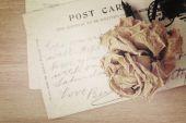 干的玫瑰和旧明信片。软光的复古风格,本文组织 — 图库照片
