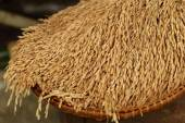 Rice in the husks, paddy, unmilled rice in wicker bamboo basket, — Stock Photo