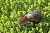 Snail on green garden — Stock Photo