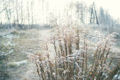 Dried up blooming plant covered with hoarfrost in the early wint — Stock Photo