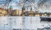View over Charles bridge, Stare Mesto, Vltava river and swans in Prague, Czech Republic — Stock Photo
