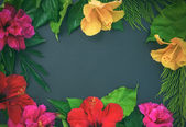 Rama kwiaty, hibiscuses, dof róż i zielone liście o — Zdjęcie stockowe