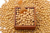 Soybeans — Stock Photo