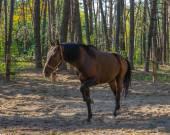 лошадь, украина, днепропетровская область. октябрь 2014 года. — Стоковое фото
