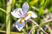 Flowers of South Africa. November 2014. — Foto de Stock