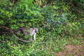 Monkey. South Africa. — Stock Photo