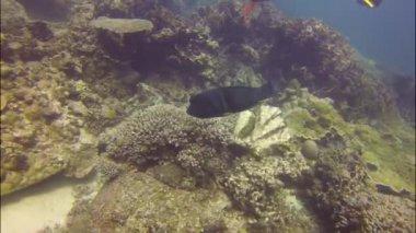 Diving at coral bay, Australia — Stock Video