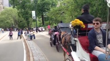 Horse and carriage with tourists in central park New York City, USA — Stock Video