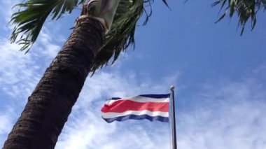 Palmtree with Costa Rican flag — Stock Video