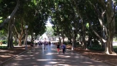 People walking in hide park, Sydney, Australia — Wideo stockowe