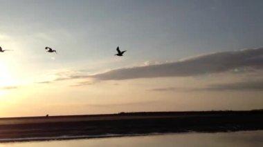 Pták létající do západu slunce ve městě quepos Kostarika — Stock video