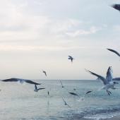 Seagulls flying over sea — Stock Photo
