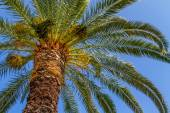 Palm Tree From Below — Stock Photo