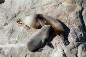 Seal feeding — Stock Photo
