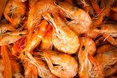 Boiled orange fresh shrimp pattern — Stock Photo