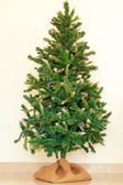 Christmas tree without any decoration — Stock Photo