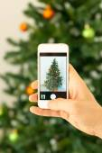 Hand taking photo of Christmas tree by smartphone — Stock Photo