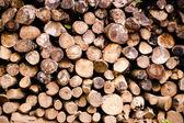 Dřevo zásobníku — Stock fotografie