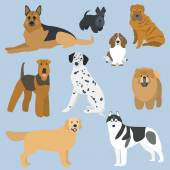 Flat design types of dogs part 2 — Stock Vector