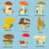 Collection of mushrooms with names in flat design — Stockvector