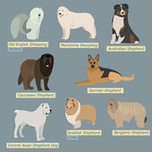 Simple silhouettes of dogs. Types of sheepdogs in flat design — Stock Vector
