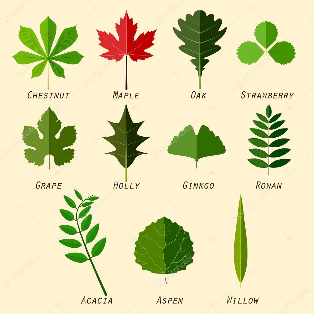 silhouettes simples des feuilles avec des noms de plantes en design plat image vectorielle. Black Bedroom Furniture Sets. Home Design Ideas