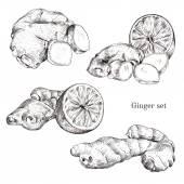 Ginger ink sketches set — Stock Vector