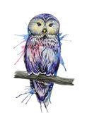 Watercolor owl sketch — Stock Vector