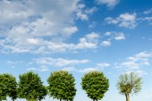 Trees on a green field and a cloudy blue sky — Stock Photo