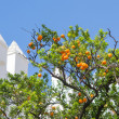 Orange tangerine branch on a tree in a sunny day  — Stock Photo #69425579
