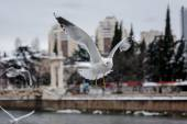 Flying seagulls at city background — Stock Photo
